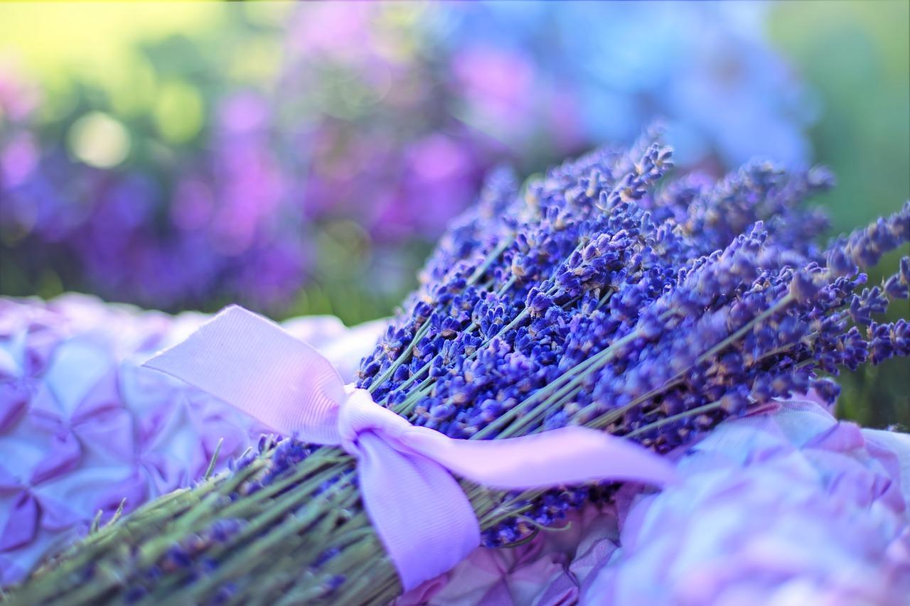 Lawenda - uprawa, pielęgnacja i właściwości rośliny!